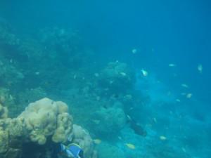 Maldives Couples 7 DSC03431